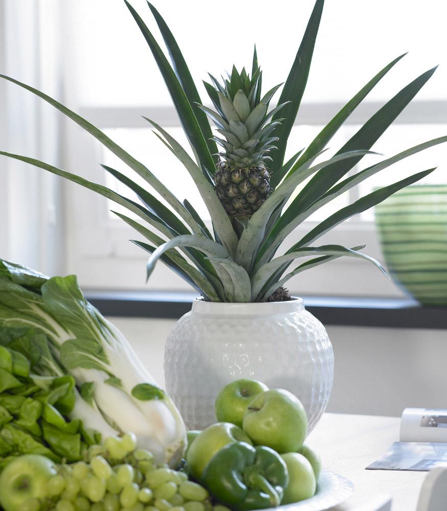 bromelia-ananas